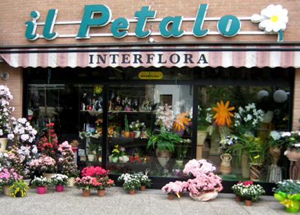 Interflora il petalo di marino creazioni floreali bouquet da sposa - Interflora contatti ...